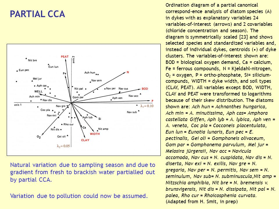 Ordination diagram of a partial canonical correspond-ence analysis of diatom species (A) in dykes with as explanatory variables 24 variables-of-interest (arrows) and 2 covariables (chloride concentration and season). The diagram is symmetrically scaled [23] and shows selected species and standardized variables and, instead of individual dykes, centroids (•) of dyke clusters. The variables-of-interest shown are: BOD = biological oxygen demand, Ca = calcium, Fe = ferrous compounds, N = Kjeldahl-nitrogen, O2 = oxygen, P = ortho-phosphate, Si= silicium-compunds, WIDTH = dyke width, and soil types (CLAY, PEAT). All variables except BOD, WIDTH, CLAY and PEAT were transformed to logarithms because of their skew distribution. The diatoms shown are: Ach hun = Achnanthes hungarica, Ach min = A. minutissima, Aph cas= Amphora castellata Giffen, Aph lyb = A. lybica, Aph ven = A. veneta, Coc pla = Cocconeis placentulata, Eun lun = Eunotia lunaris, Eun pec = E. pectinalis, Gei oli = Gomphoneis olivaceum, Gom par = Gomphonema parvulum, Mel jur = Melosira jürgensii, Nav acc = Navicula accomoda, Nav cus = N. cuspidata, Nav dis = N. diserta, Nav exi = N. exilis, Nav gre = N. gregaria, Nav per = N. permitis, Nav sem = N. seminulum, Nav sub= N. subminuscula,Nit amp = Nitzschia amphibia, Nit bre = N. bremensis v. brunsvigensis, Nit dis = N. dissipata, Nit pal = N. palea, Rho cur = Rhoicosphenia curvata.